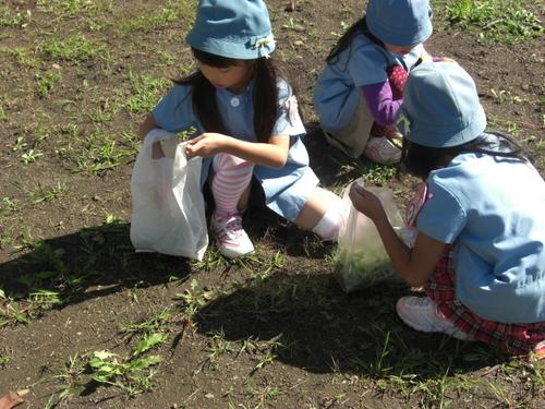草むしり2.JPGのサムネール画像のサムネール画像